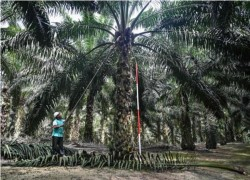 India asks refiners to stop buying Malaysian palm oil after political row: Sources