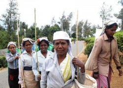 Lankan President's initiative to rescue tea and tourism