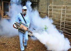 Over 10,000 people infected with dengue in Sri Lanka in January