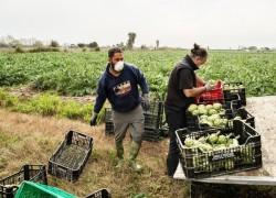Food supply is the next virus headache