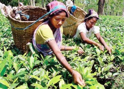 Indian tea plantation workers look to the WB to prevent a coronavirus disaster