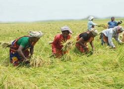 Coronavirus puts Bangladesh's agriculture and economy at risk