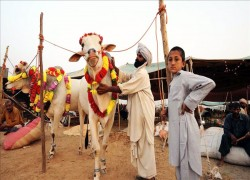 Virus lockdown threatens livestock in Pakistani desert