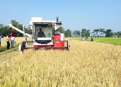 Farmers reap misery from mechanized agriculture
