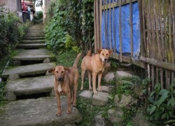 Indian state of Nagaland bans sale of dog meat