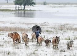 AS FLOODS WORSEN IN ASSAM SIX MORE PEOPLE DIE, 22 LAKH PEOPLE AFFECTED
