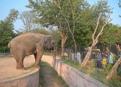 Pakistan to send lonely elephant to Cambodia