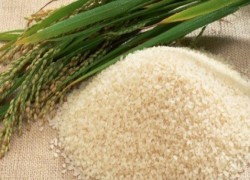 PAKISTAN, CHINA TO SET UP HYBRID RICE RESEARCH CENTRE
