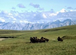 TRUMP ADMINISTRATION FINALIZES PLAN TO OPEN UP ALASKA WILDLIFE REFUGE TO DRILLING