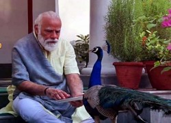 Indian Prime Minister Narendra Modi spends time with peacocks at his Delhi residence