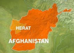 আফগানিস্তানের হেরাতে কারাদাঙ্গায় নিহত ৮