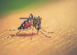 DENGUE CASES ON THE RISE AS BANGLADESH REPORTS 14 NEW HOSPITALISATIONS