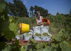 Chinese tariffs leave Australian winemakers high and dry