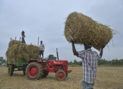 Why India can't uplift its farmers the same as China