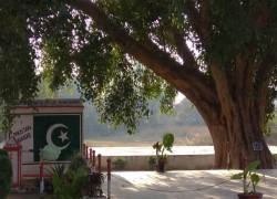 UNIQUE BANYAN TREE DEMARCATES INDIA-PAKISTAN BORDER IN JAMMU