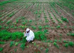 কৃষি: বিদেশে জমি কিনে 'কন্ট্র্যাক্ট ফার্মিং' করতে চায় বাংলাদেশ, কতটা সম্ভব?