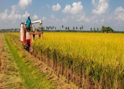 BANGLADESH, INDIA LOOK AT FORGING CLOSER TIES ON FARM FRONT
