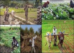 ভারতে কৃষির কালো আইন, বাংলাদেশে কি সাদা?