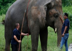 PAKISTAN ZOO BEGINS MAMMOTH MAKEOVER AFTER LONELY ELEPHANT'S DEPARTURE