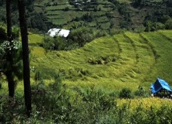 Impact of climate change on Bhutan's forests