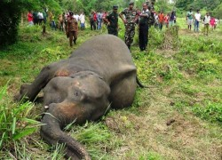 Human-elephant conflict exacts a heavy toll in Sri Lanka