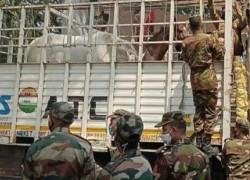 বাংলাদেশ সেনাবাহিনীকে ১৫টি ঘোড়া উপহার দিলো ভারত