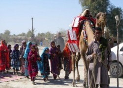 Roshan the camel brings books to Pakistan's homeschooled children