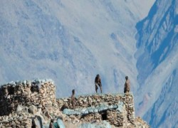 লাদাখের কাছে যুদ্ধবিমানের পরীক্ষামূলক মহড়া শুরু করেছে চীন