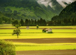 Sri Lanka's muddled fertilizer policy threatens agriculture