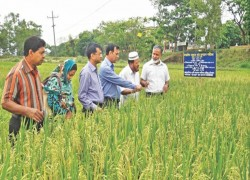 Bangladesh may have a solution for Sri Lanka's muddled fertilizer policy