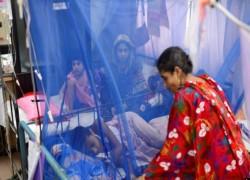 বাংলাদেশে উদ্বেগ জনক হারে বাড়ছে ডেঙ্গু আক্রান্তদের সংখ্যা