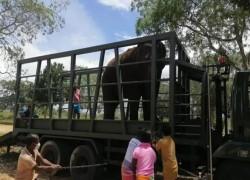 Anger as Sri Lanka court returns elephants to alleged traffickers